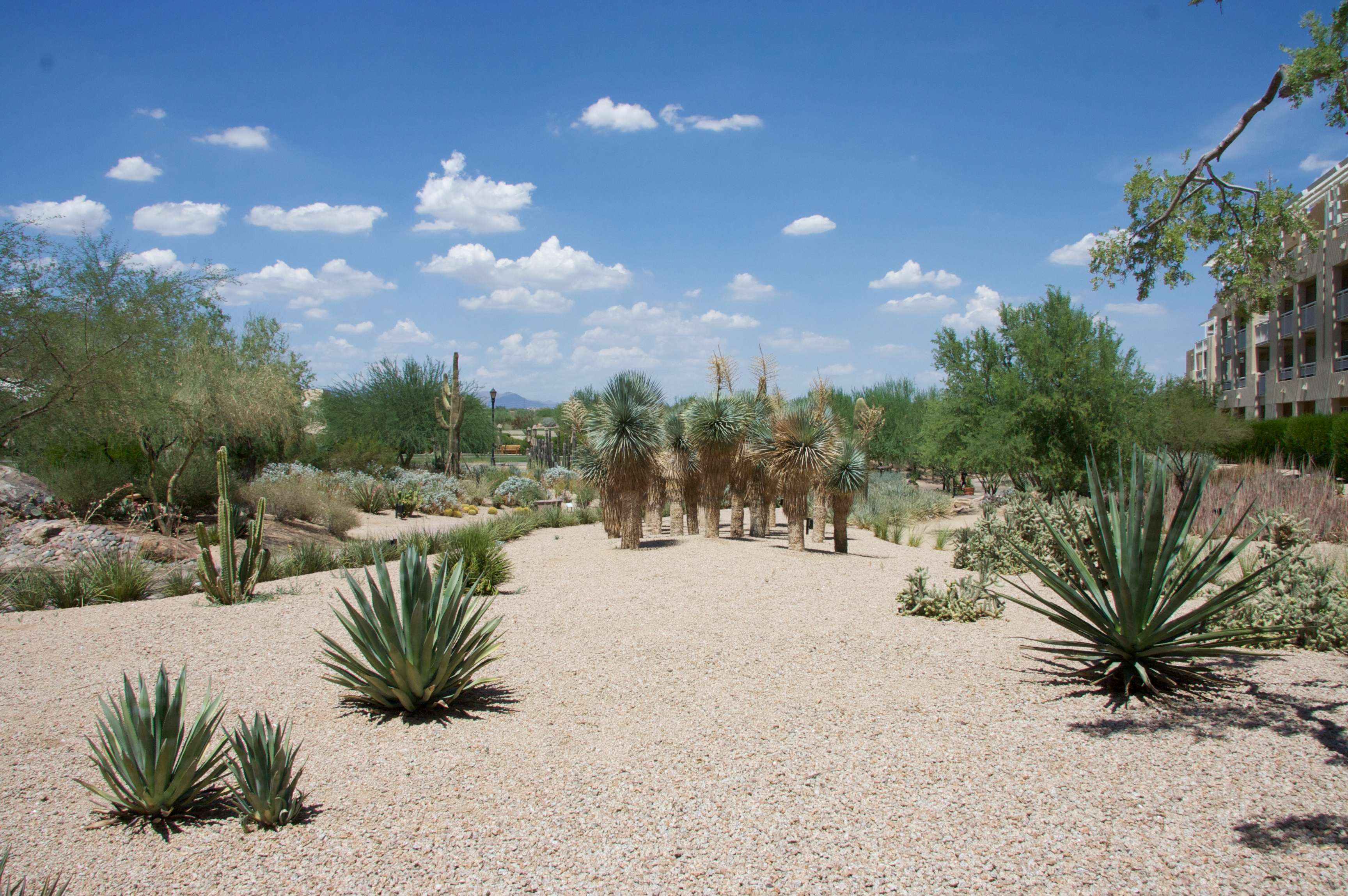 Formal Landscape Arizona Backyard Landscaping Pictures Az Flag